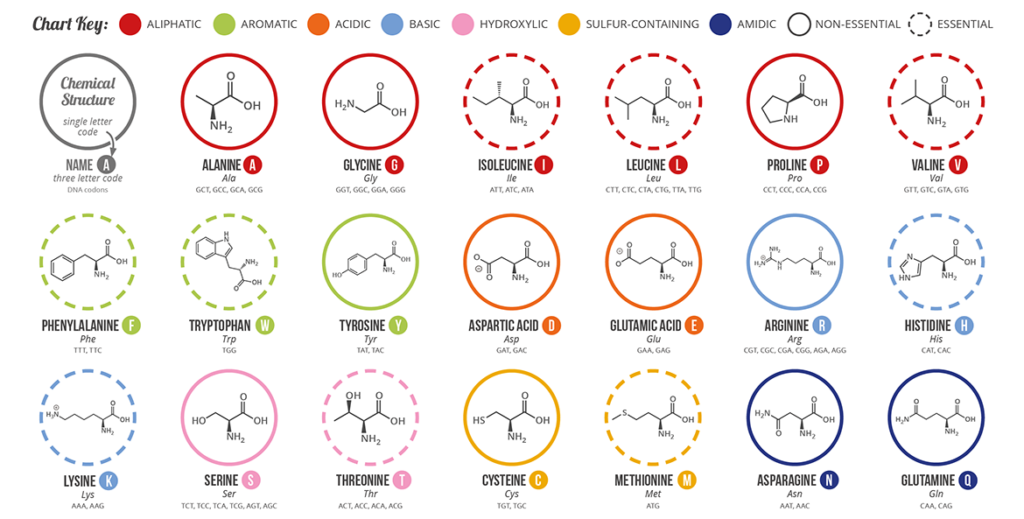 Amino Acids for plants