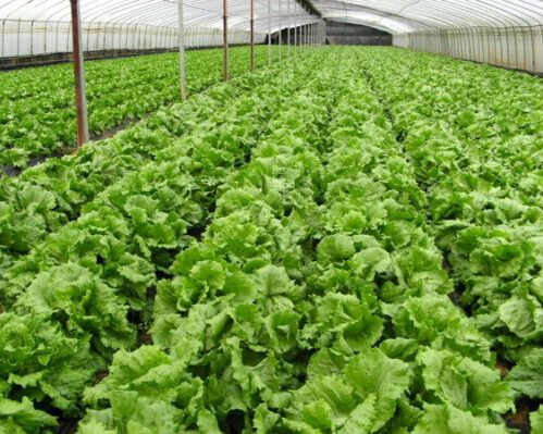 organic_farm_vegetables_214780